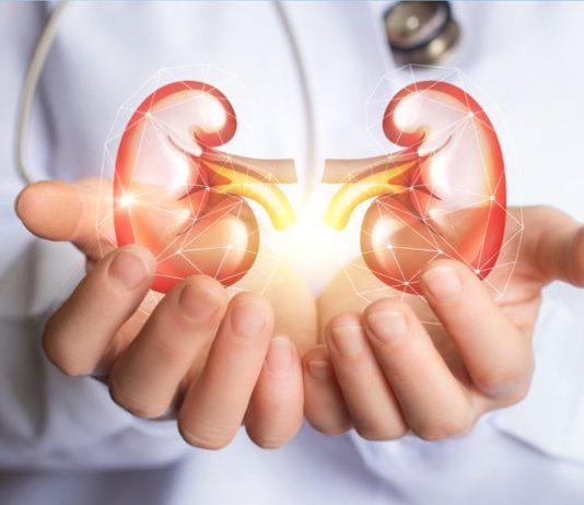 Zdrave ledvice